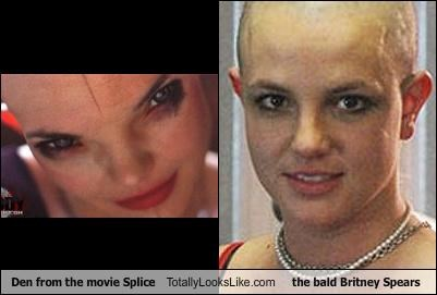bald,britney spears,den,movies,singers,splice