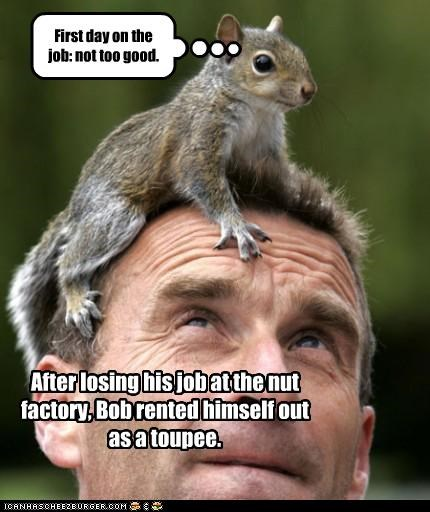 First day on the job: not too good. After losing his job at the nut factory, Bob rented himself out as a toupee.