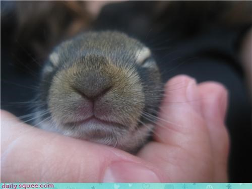 cute nose squirrel - 3582260736