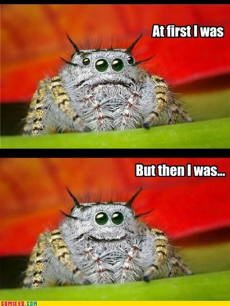 animals,but then i was like,but then i,cute,scary,spiders