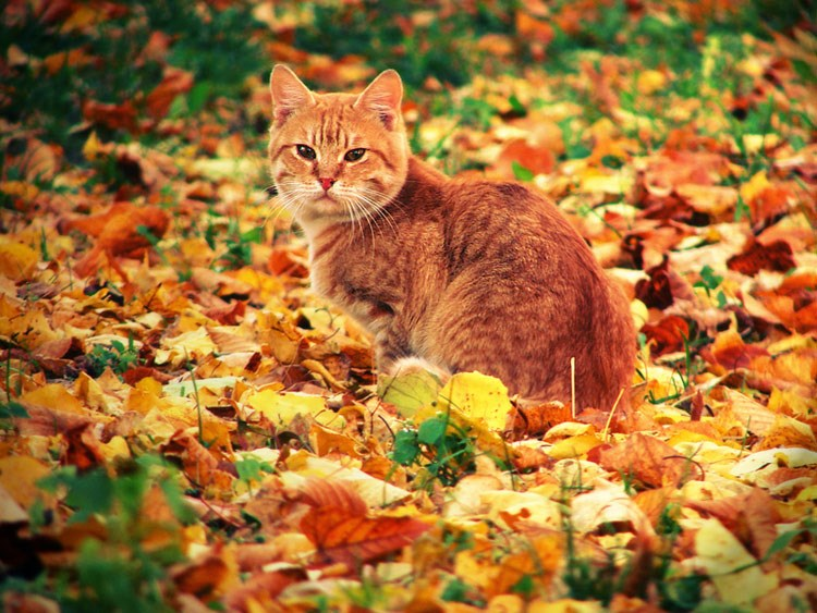 4 problems your pets will face this autumn