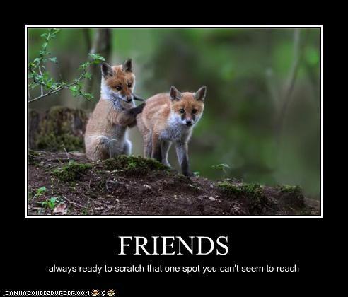 fox friends helping lolfoxes - 3583768320