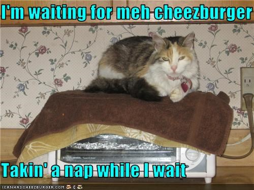 Cheezburger Image 3583895808