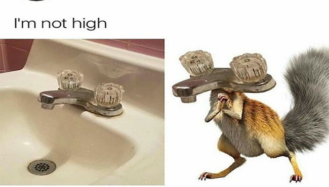 funny squireels memes