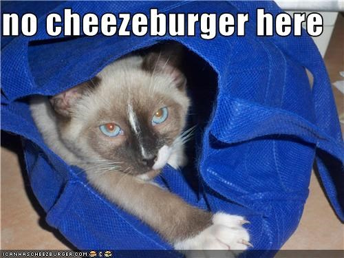 Cheezburger Image 3584092160