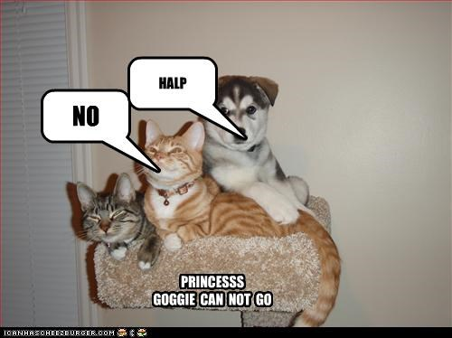 PRINCESSS GOGGIE CAN NOT GO NO HALP
