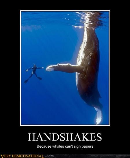 animals,business,contracts,diving,Pure Awesome,whales