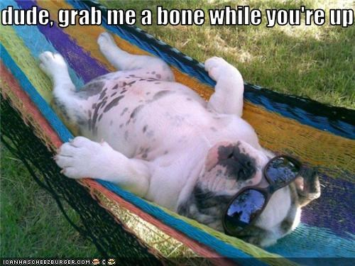 bone,bulldog,dogs,hammock,lazy