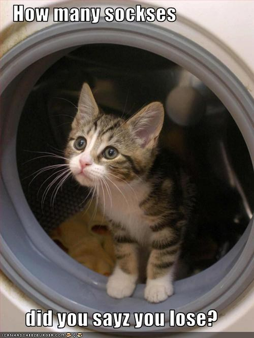 cute,kitten,laundry,socks