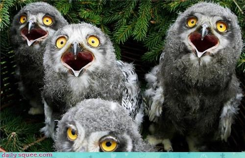 face,Owl,reaction