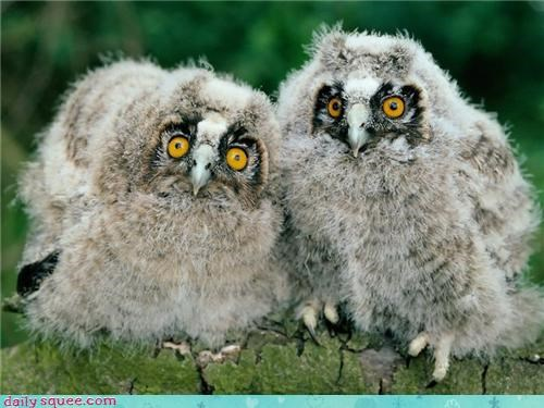 cute,face,owls