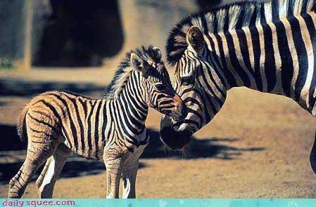 baby nerd jokes zebra - 3586497536
