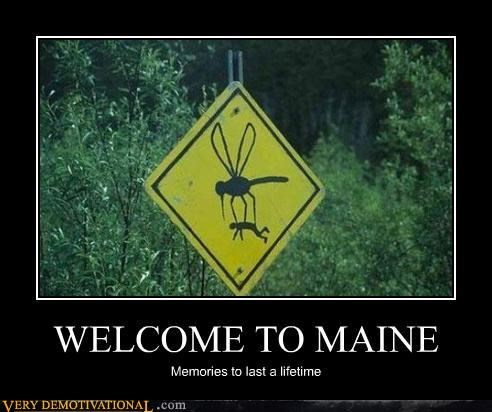 america life maine memories mosquitoes signs Terrifying - 3586650880