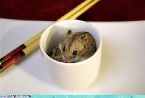 hamster Japan tiny - 3586829056