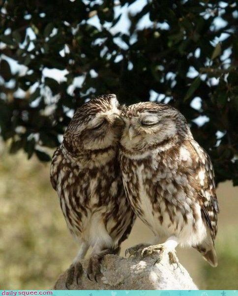 face,love,Owl