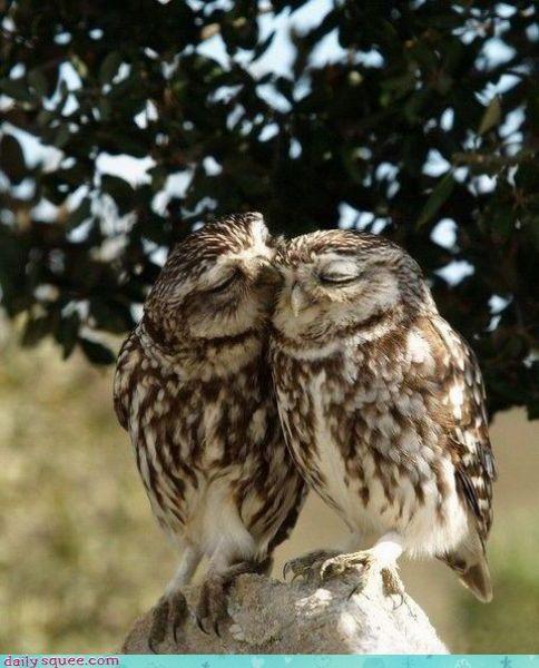 face love Owl - 3586845184