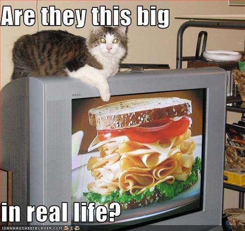 fud nom nom nom sandwich TV want - 3586942976