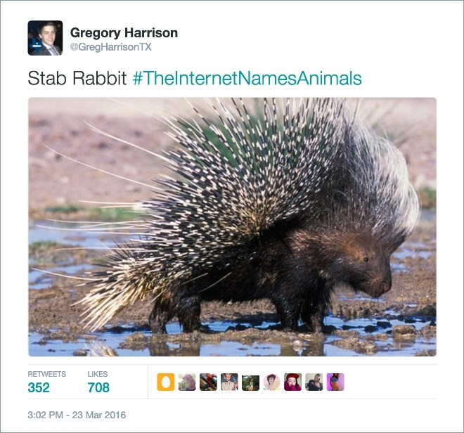 a funny list of new names for animals