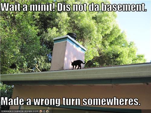 basement cat lost roof - 3589663744