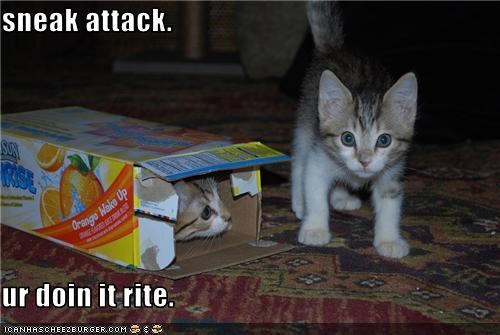 attacking cute doin it rite kitten plotting sneaky - 3589723392