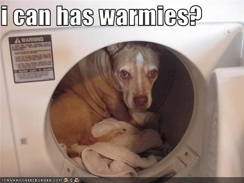 dogs dryer laundry warm what breed - 3589830144