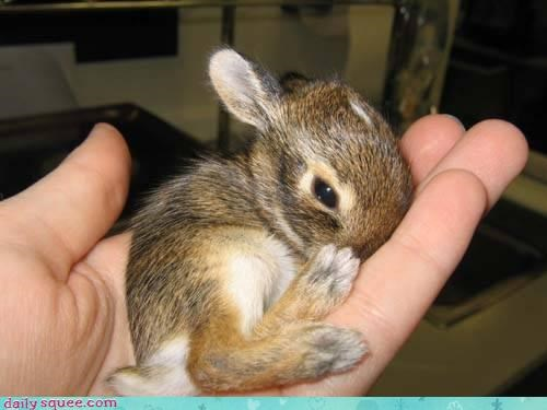 bunny feet toes - 3590469376