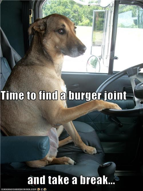 Cheezburger Image 3591126272
