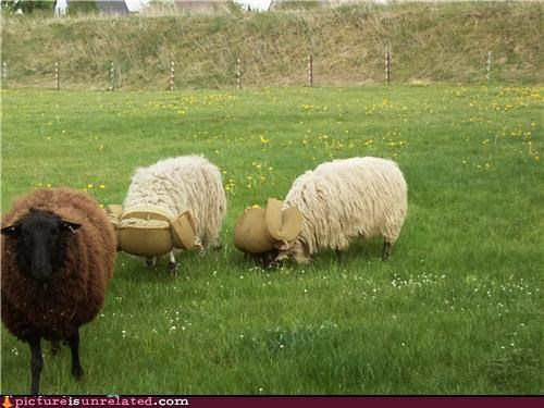 animals costume covers farms horns sheep wtf - 3591705344