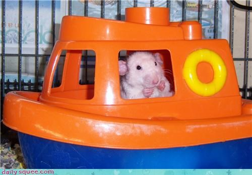 boat cute rat