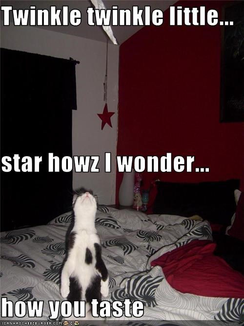 nom nom nom star want - 3592647168