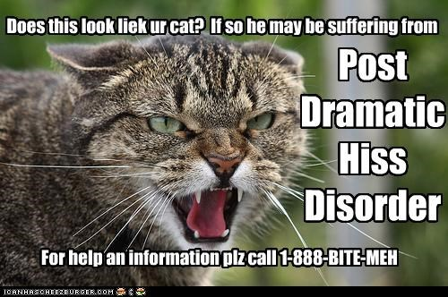 Does this look liek ur cat? If so he may be suffering from Post Dramatic Hiss Disorder For help an information plz call 1-888-BITE-MEH