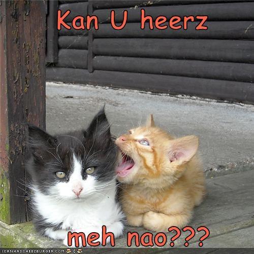 Cheezburger Image 3593496064