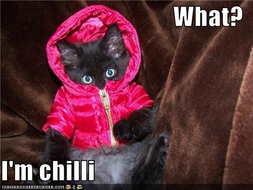 cold costume kitten - 3593597184
