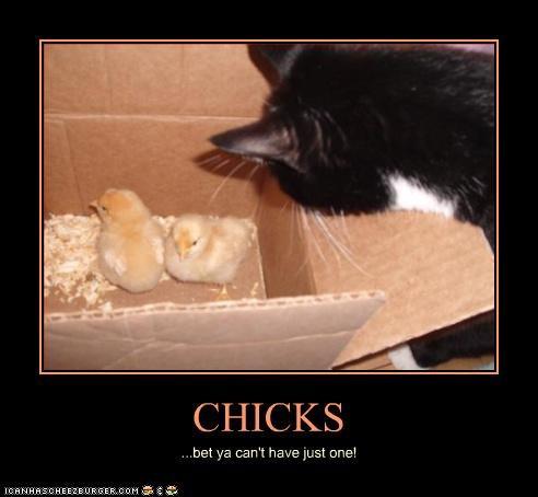 Cheezburger Image 3593649664