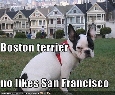 angry,boston terrier,Hall of Fame,outside,san francisco
