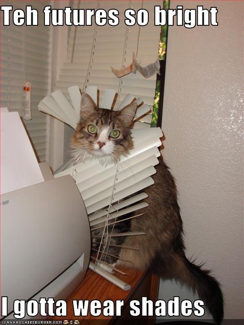 annoying blinds destruction shades - 3593798656