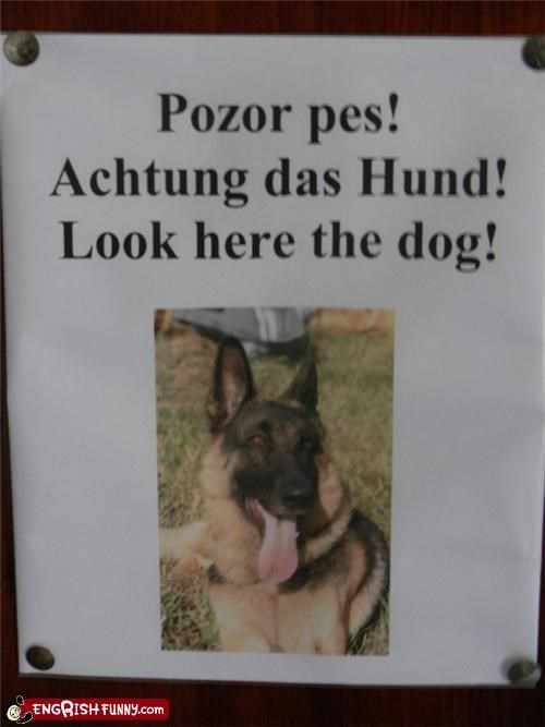 dogs german look sign Unknown - 3594013952