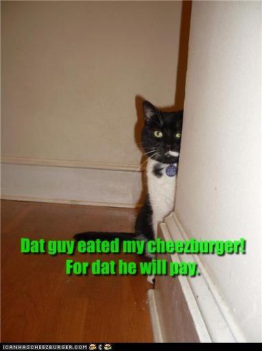 Cheezburger Image 3594162176