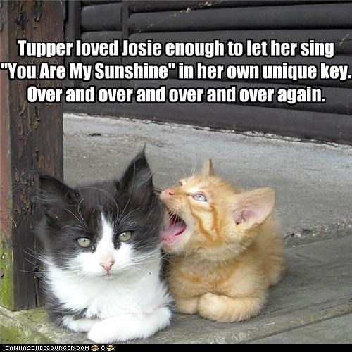 caption captioned cat Cats kitten love patience relationship singing song tabby tolerance you are my sunshine - 3594395904