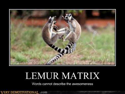 animals I know kung fu lemurs Pure Awesome so good the matrix - 3595910656