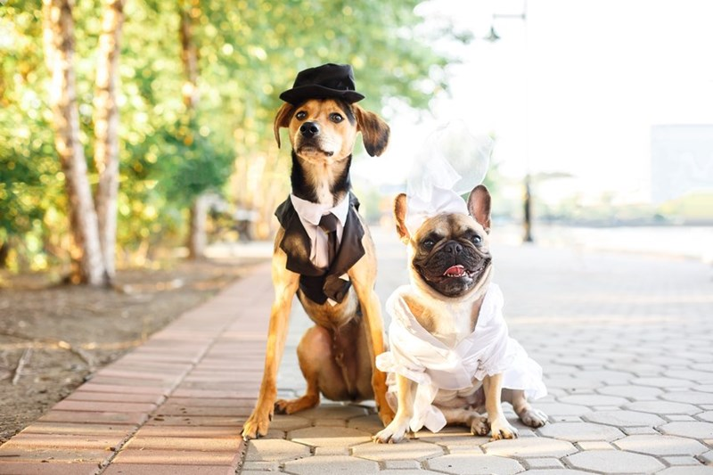 funny photos of dogs getting marries