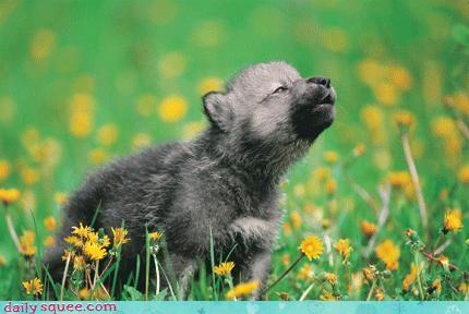 hipster puppy wolf - 3596887552