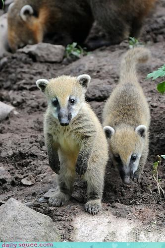 coati,friends,whatsit