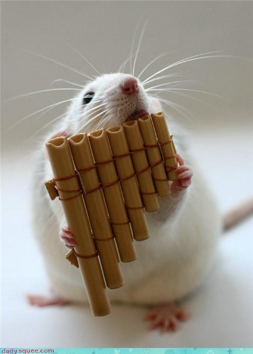 pops rat squee spree - 3597075456