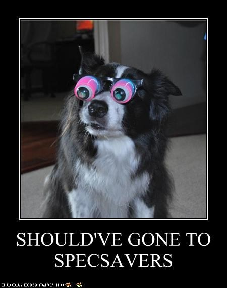 border collie,glasses,googly eyes