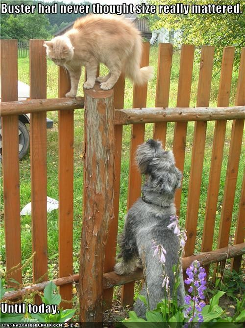 cat fence outside schnauzer short - 3597126400