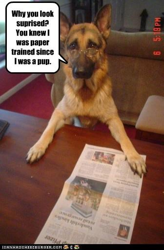 german shepherd,glasses,newspaper,paper,pun