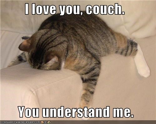 caption captioned cat couch face down Hall of Fame happy I Can Has Cheezburger love passed out sleeping understanding - 3597226240