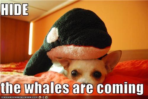 chihuahua hide stuffed toy whale - 3597246976