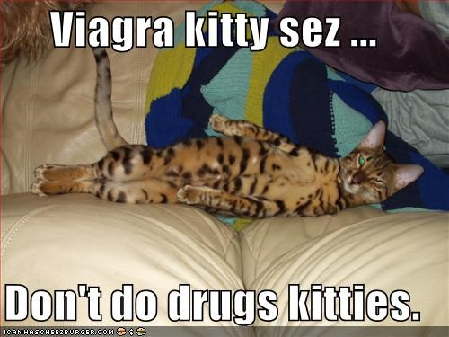 Viagra kitty what is a celebrex
